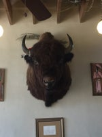 Bison Coffeehouse