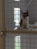 Fairbanks Animal Hospital
