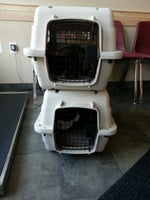 All Pets Veterinary Care