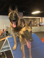 Zoom Room Dog Training - Prices, Photos & Reviews - Pacific Grove, CA