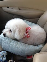 Uptown Dog Grooming