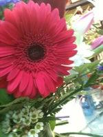 Flowers By Cammy