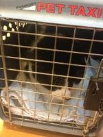 Frankfort Animal Clinic, P.S.C.