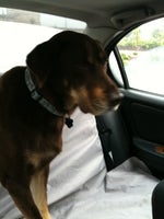 Neponset Pet Center & Animal Hospital