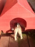 Montage Happyland Dog & Cat Pet Boarding