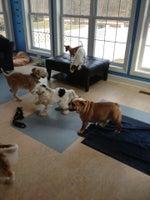 Happy Hounds Doggy Daycare
