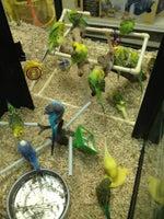 Critters Pet Shop