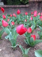 Concord Memorial Garden