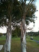 Royal Vista Golf Club