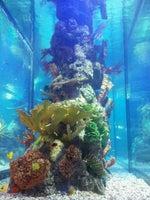 Islamorada Fish Company