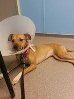 Rockhill Pet Clinic