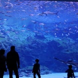 九十九島水族館 海きらら