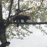 小獣舎|旭山動物園