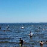 小川原湖 湖水浴場