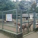 鹿島神宮 境内鹿園