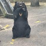 阿仁熊牧場 くまくま園