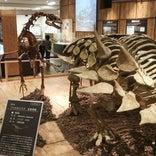丹波竜化石工房 ちーたんの館