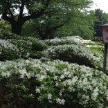 松ヶ池公園 / 白つつじ公園