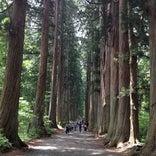 戸隠神社 奥社杉並木