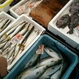 小浜市水産食品センター