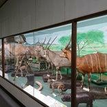 つやま自然のふしぎ館・津山科学教育博物館
