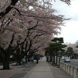 十和田市官庁街通り