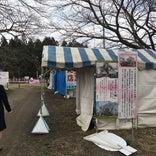 伊佐沢 久保桜