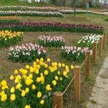 馬見丘陵公園 花の広場