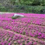 花の郷滝谷花しょうぶ園