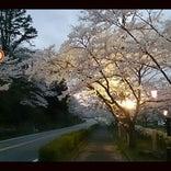 桜淵県立自然公園