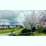 河北中央公園