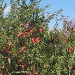果実の里 原田農園