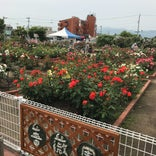 バラ園 藍翠苑