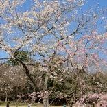 愛知県森林公園(尾張旭森林公園)