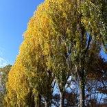 山辺町総合中央公園