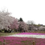所沢航空記念公園
