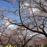 万博公園 日本庭園