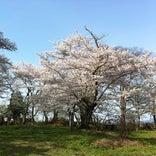 城山公園(三春城跡)