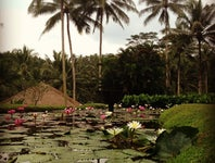 Cover Photo for Roman B's map collection, Bali