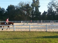 Gentle Touch Stables Horseback Riding And Showing