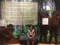 Pennsylvania Lumber Museum