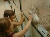 Pets R Us