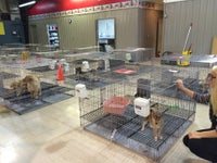 Tully's Kennels