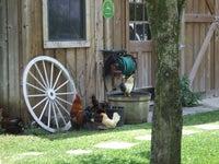 Honey Farm Bed & Breakfast
