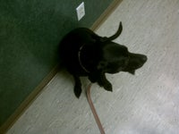 Petsburgh Pet Care