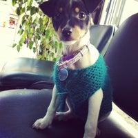 Das Foto wurde bei Outlet Mascotas von Camila S. am 6/21/2012 aufgenommen