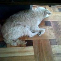 3/12/2012 tarihinde Paula P.ziyaretçi tarafından PuntoMascotas'de çekilen fotoğraf