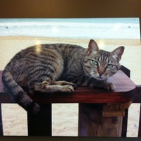 Photo taken at Paradise Pet Hospital by Windy Y. on 4/28/2012