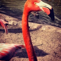 Photo taken at Flamingo Exhibit by Jansen G. on 3/25/2012