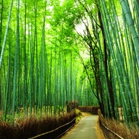 Photo taken at Arashiyama Bamboo Grove by Marylynn C. on 6/15/2012